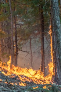 Wildfire costs and losses continue to grow.  Robust biomass markets can help lower the costs of forest restoration and protect more acres from wildfire.